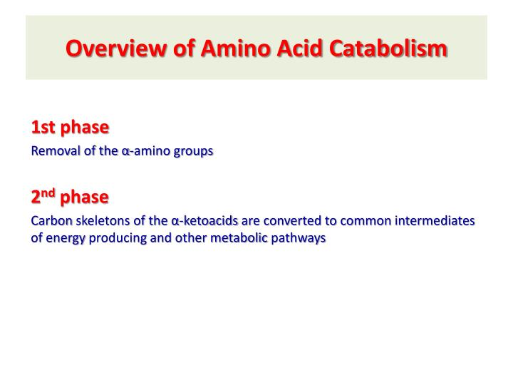 Overview of amino acid catabolism