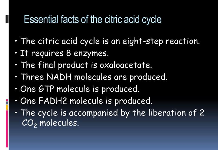 Essential facts of the citric acid cycle