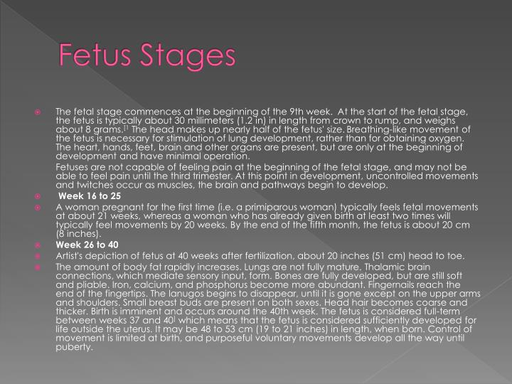 Fetus Stages