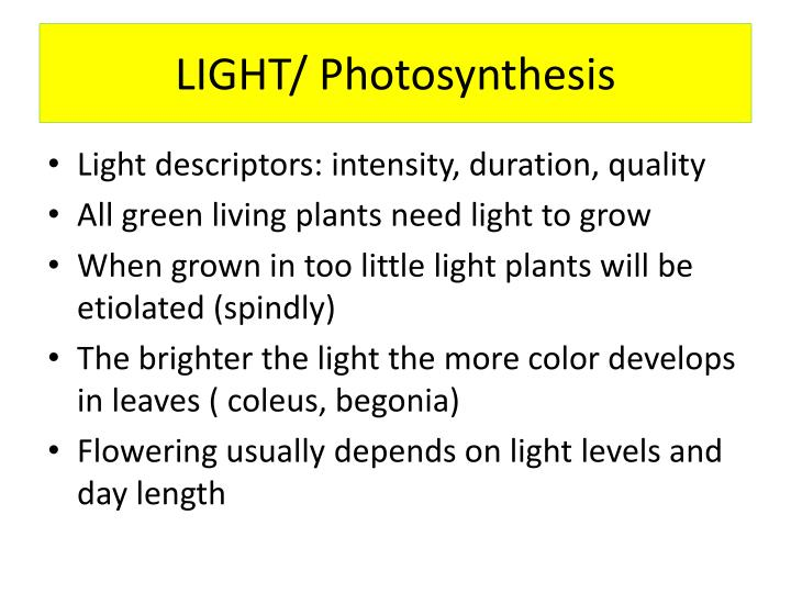 Light photosynthesis