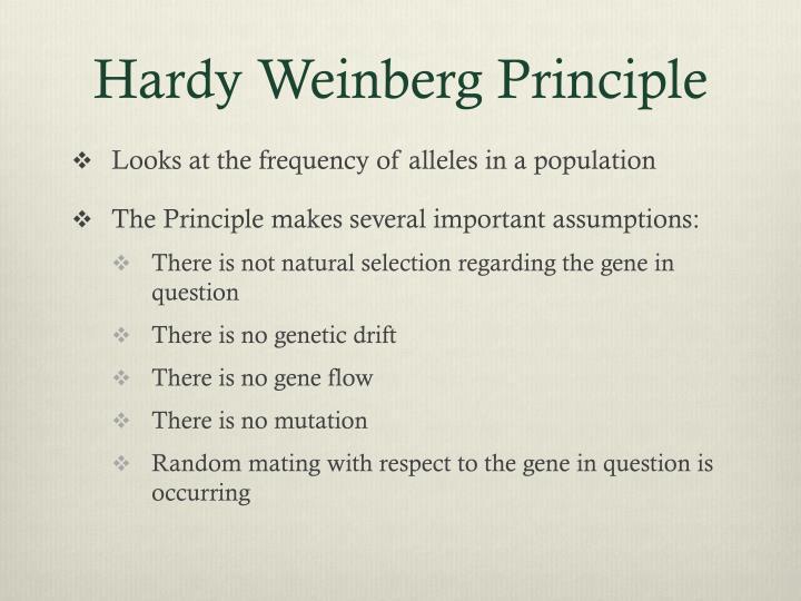 Hardy Weinberg Principle