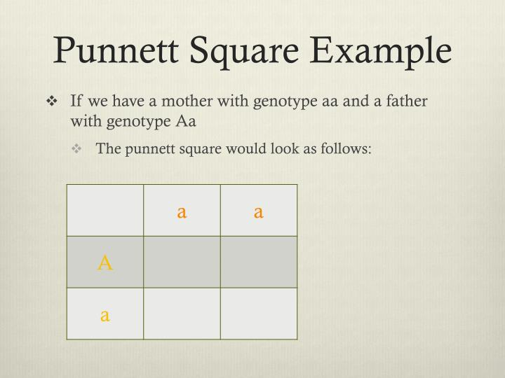 Punnett Square Example