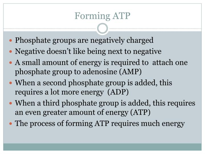 Forming ATP