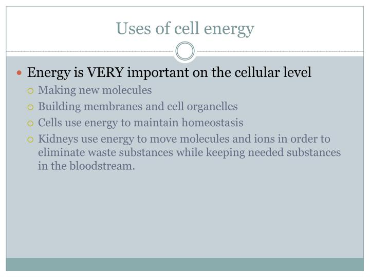 Uses of cell energy