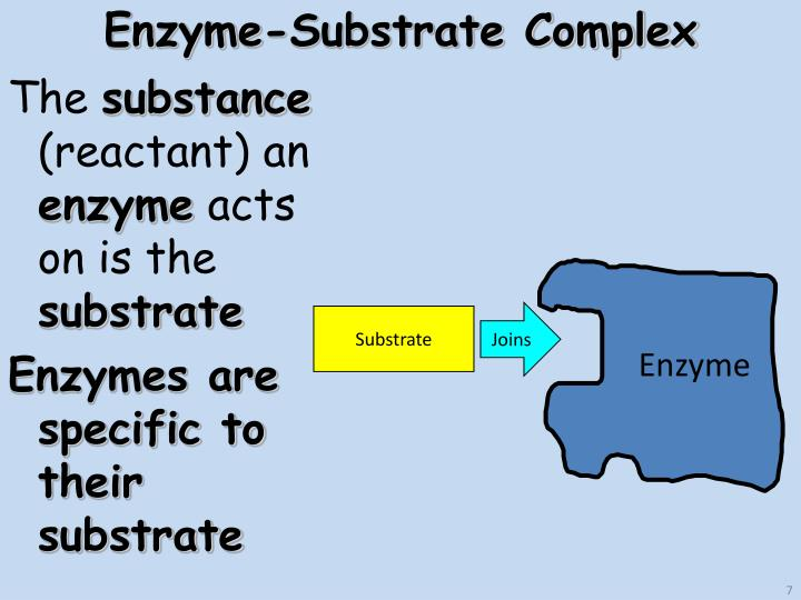 enzyme substrate complex - 720×540