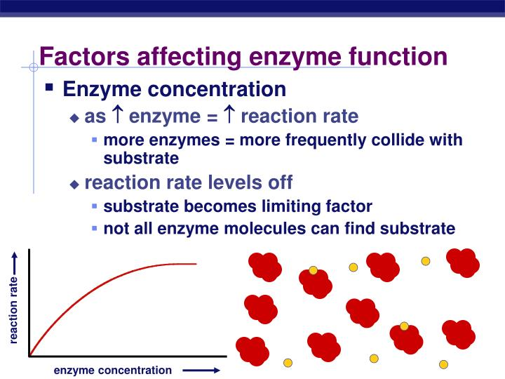 function of enzymes in a metabolic reaction biology essay So any one function, such as getting energy from a glucose molecule, actually involves many reactions, each with a specific enzyme enzyme activity is influenced by many factors you will be examining some of the major factors, which influence the activity of an enzyme called catalase.
