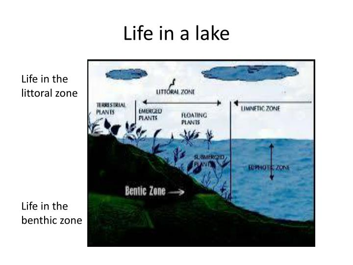 Life in a lake