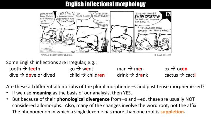 English inflectional morphology