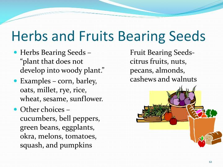 Herbs and Fruits Bearing Seeds