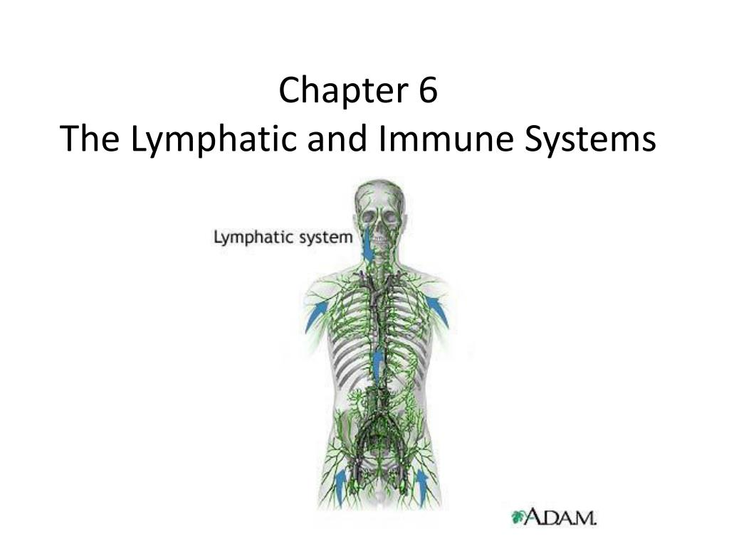 Ppt Chapter 6 The Lymphatic And Immune Systems Powerpoint