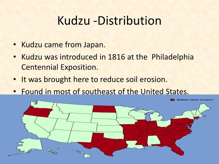 Kudzu distribution