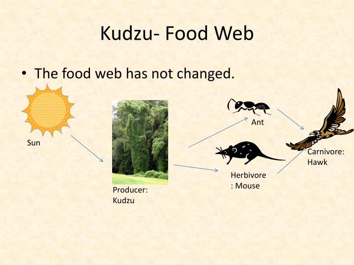 Kudzu- Food Web