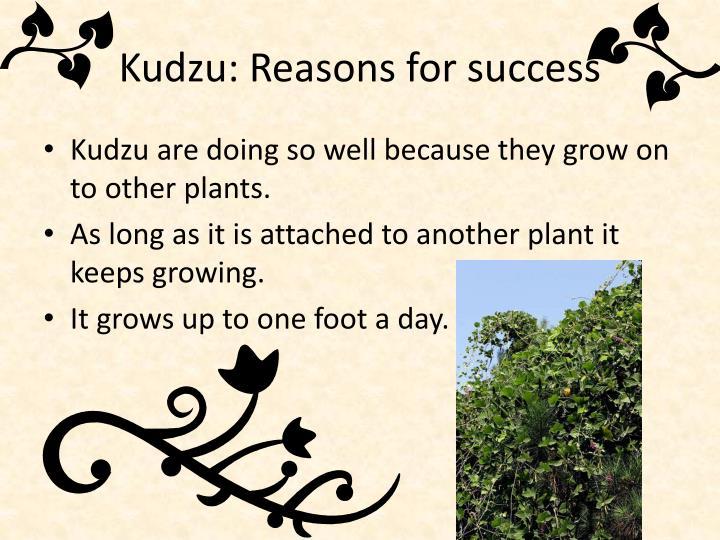 Kudzu: Reasons for success