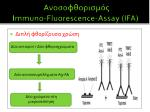 immuno fluorescence assay ifa7