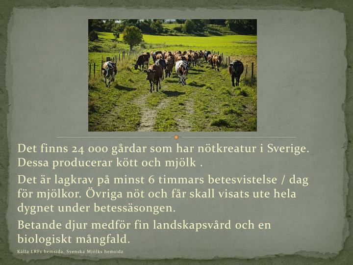 Det finns 24 000 gårdar som har nötkreatur i Sverige. Dessa producerar kött och mjölk .