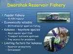 dworshak reservoir fishery