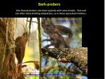 bark probers