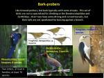 bark probers1