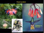 flower probers1