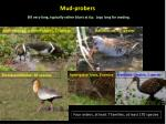 mud probers1