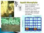aquatic macrophytes