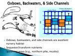 oxbows backwaters side channels