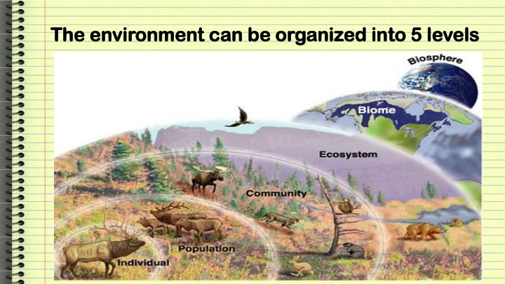 The environment can be organized into 5 levels