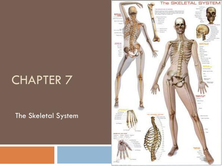 a paper on the skeletal system Skeletal system essay - secure student writing website - get help with online papers quick top-quality college essay writing and editing website - order custom written essay papers starting at $10/page reliable academic writing and editing company - get online essays, term papers, reports and theses quick.