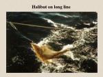 halibut on long line
