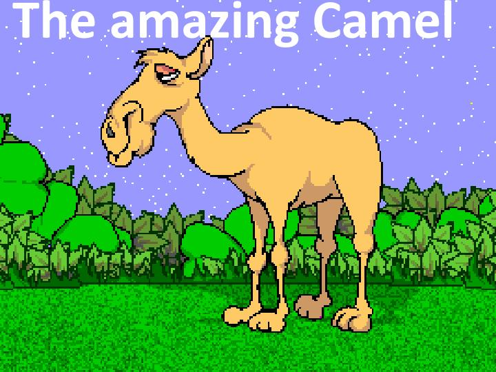 the amazing camel n.