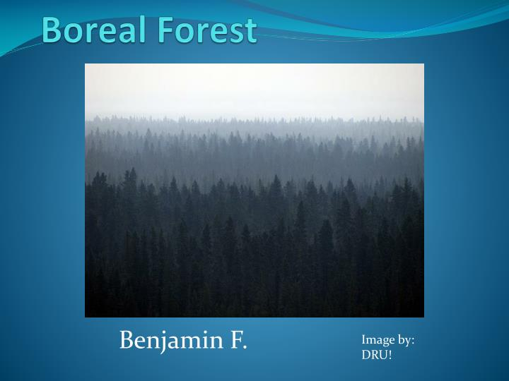 boreal forest n.