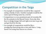 competition in the taiga