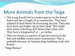 more animals from the taiga
