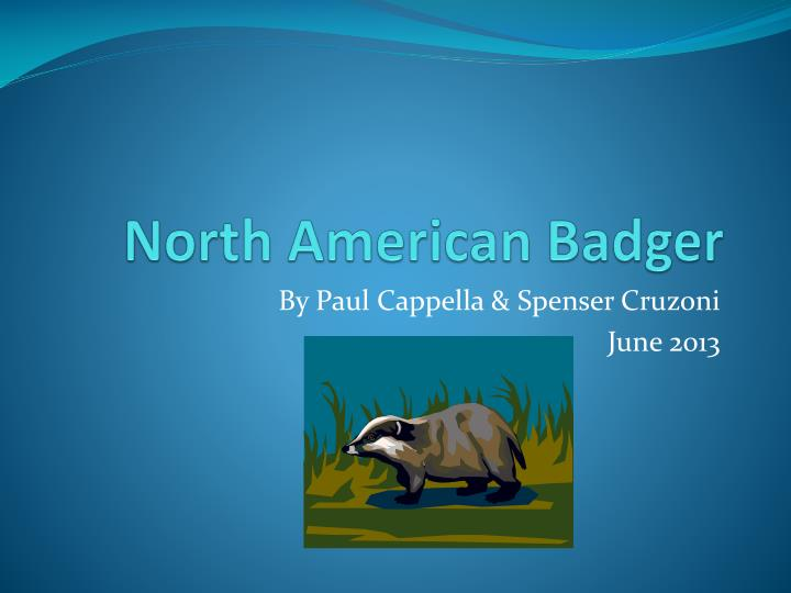 north american badger n.