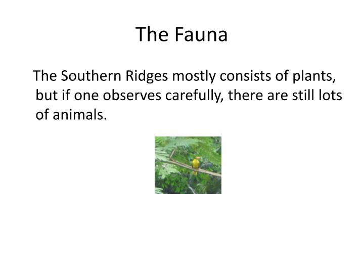 The Fauna