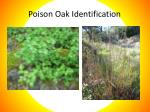 poison oak identification