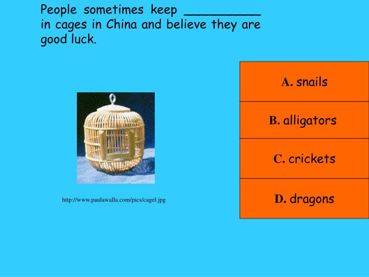 People sometimes keep __________ in cages in China and believe they are good luck.