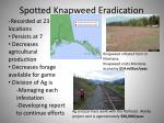 spotted knapweed eradication