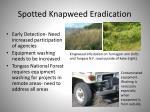 spotted knapweed eradication1