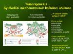 tumorigenezis gyullad si mechanizmusok kr nikus ab zusa