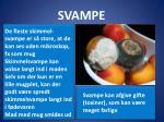 svampe1