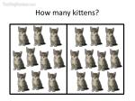 how many kittens10