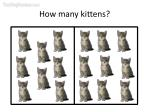 how many kittens13