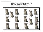 how many kittens15