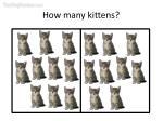 how many kittens16