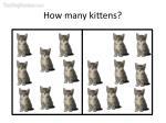 how many kittens18