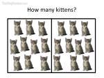 how many kittens19