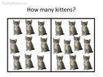 how many kittens21