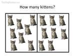 how many kittens23