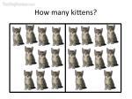 how many kittens25
